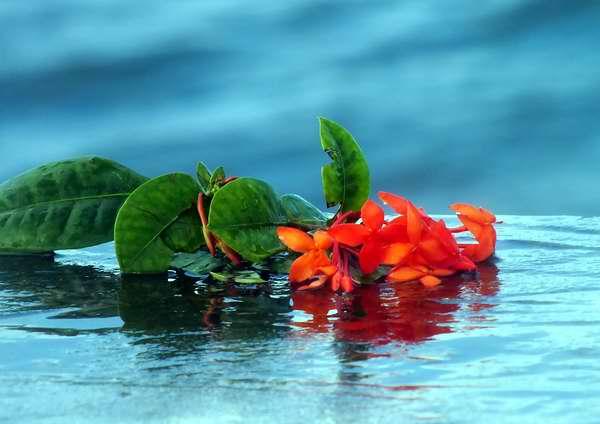 Flores para el Señor de la Vanguardia. Foto Abel Rojas