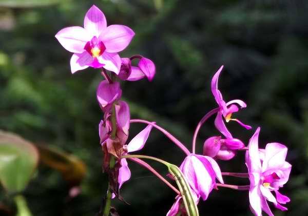 La orquídea también demuestra un profundo amor y compromiso. Foto Abel Rojas