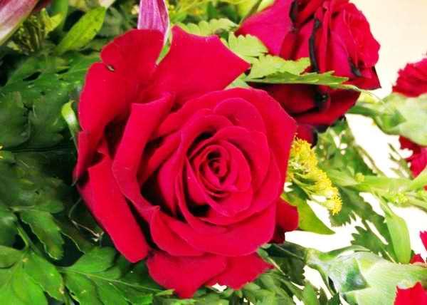 Rosas rojas para todos los enamorados en este 14 de Febrero. Foto Abel Rojas