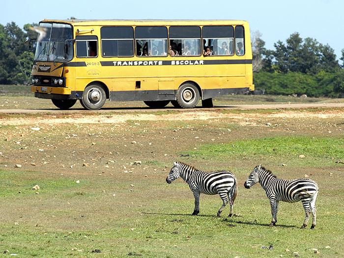 Unas de las peculiaridades del Parque Zoológico Nacional de Cuba es que algunas especies de animales permanecen libres en su hábitat. Foto: Abel Rojas Barallobre