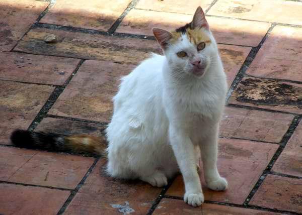 Astuto cazador y elegante, así son los felinos domésticos. Foto Abel Rojas