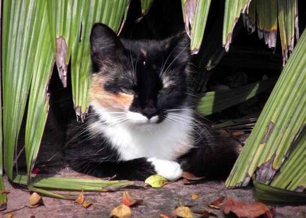 El gato es un gran cazador. Foto Abel Rojas