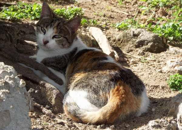 Los gatos domésticos necesitan del cariño y la atención de sus dueños. Foto Abel Rojas