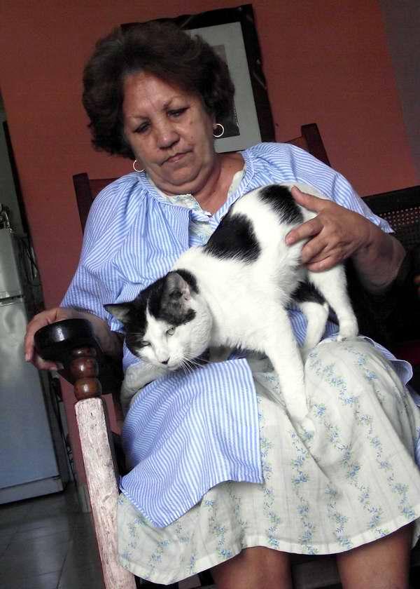 Etológicamente, los gatos ven a los humanos como un sustituto de las madres. Foto Abel Rojas