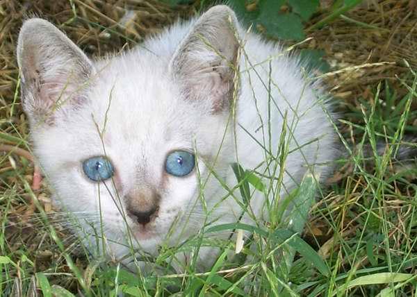 La vista de los felinos está especialmente adaptada para la caza nocturna. Foto Abel Rojas