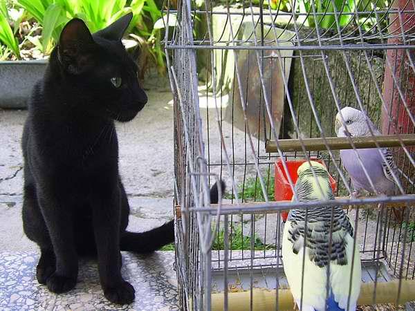 El gato posee una gran memoria y muestra gran aptitud para aprender por medio de la observación y la experiencia. Foto Abel Rojas