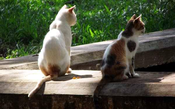 Los gatos poseen un gran poder de concentración. Foto Abel Rojas