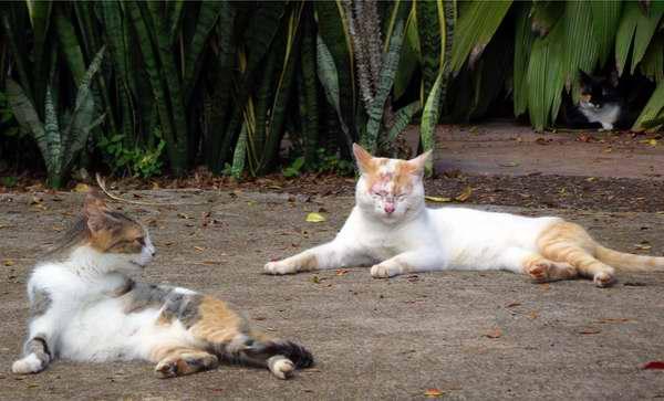 Los gatos poseen un sistema sensorial sofisticado entre los mamíferos por sus avanzados sentidos de visión, gusto y tacto. Foto Abel Rojas