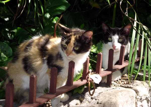 Los gatos se caracterizan por la variedad de sus colores. Foto Abel Rojas