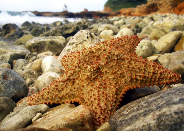 Estrella de mar. Foto Abel Rojas