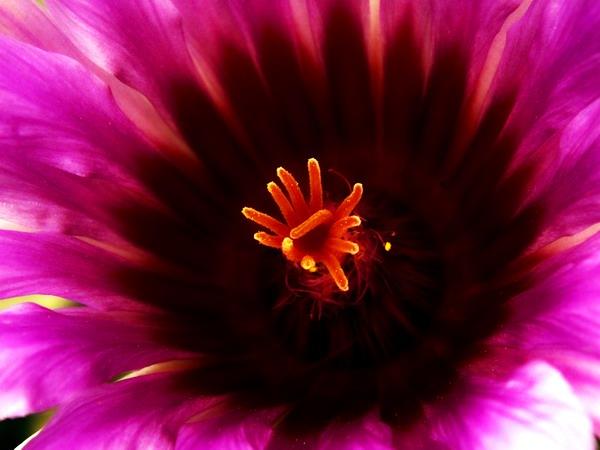 Técnica macro de una flor cubana. Foto Abel Rojas