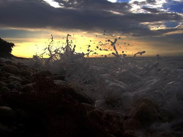 Peligrosas medusas