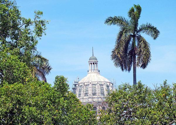 Las palmas las encontramos por doquier en Cuba. Ellas, majestuosas y orgullosas por su porte y belleza, engalanan tanto las ciudades como nuestros bastos campos. Foto Abel Rojas Barallobre