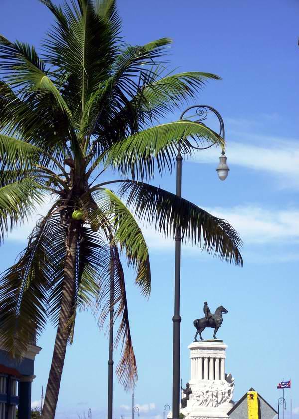 En la Isla encontramos más de un centenar de especies de palmas; de estas 90 son endémicas. Foto Abel Rojas Barallobre