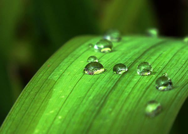 El rocío, pequeñas perlas de la naturaleza. Foto: Abel Rojas