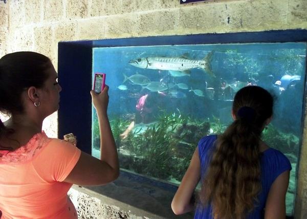 El Acuario Nacional de Cuba siempre persigue afianzar los conocimientos sobre la biodiversidad marina y su preservación. Foto Abel Rojas Barallobre