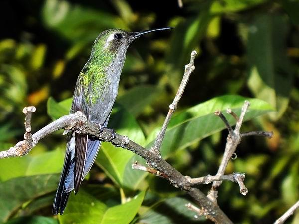 Para conservar la biodiversidad biológica cubana.