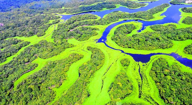 Promete Jair Bolsonaro medidas de retroceso medioambiental