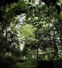 Selección de especies boscosas en Camagüey para enfrentar cambio climático