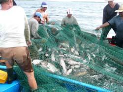 Proteger el medio ambiente desde la acuicultura